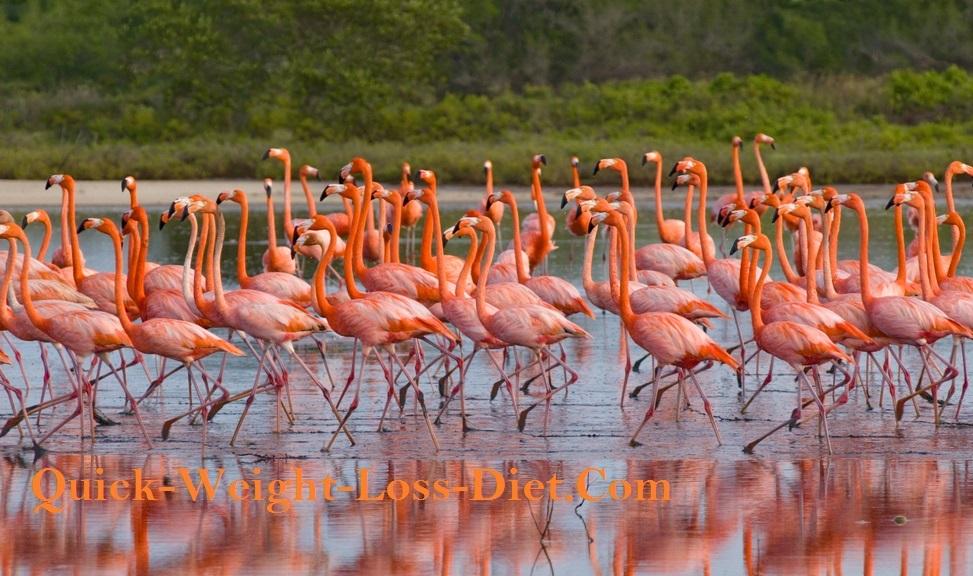 Beta_carotene_flamingo_colour